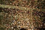 wyrzutnia konfetti wynajem